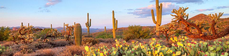 Preiswerte Hotels Scottsdale nicht Hotelplan